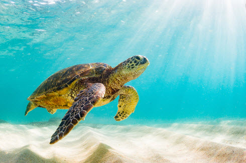 Oahu-cruises-to-Hawaii