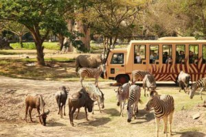 San-Diego-Zoo-on-San-Diego-Tourism