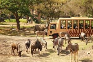 San-Diego-Zoo-on-San-Diego-Tourism