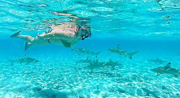 Things-to-do-in-Bora-Bora-Swim-With-Sharks
