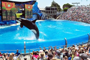 Best Things To Do In San Diego For Kids