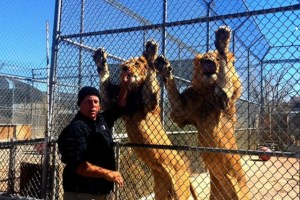 Attraction In Las Vegas For Family - The Nevada Zoological and Botanical Park