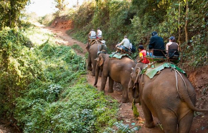 Elephant Trekking Adventure in Chiang Mai, Thailand