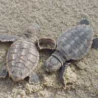 Sea Turtle Hatching Season!