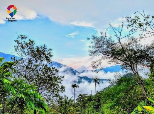 Cloudy mornings at HolisticStay, Kerala