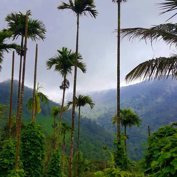 Lush Green view