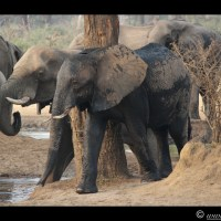 Pg 14 - Senyati Safari Camp, Chobe, Botswana - Day 15 and 16