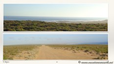 South Africa West Coast - Drive from Houthoop through the Namaqua and Skilpad National Park towards Cape Town.066