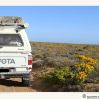NAMIBIA TO RSA - WEST COAST SCENIC ROUTE TO CAPE TOWN