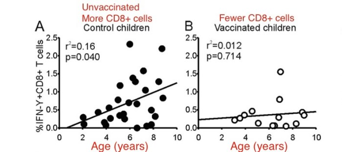 CD8+ cells and vaccines