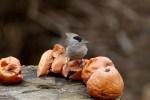 madáretetés almával