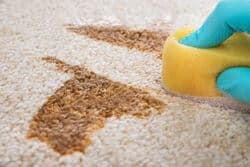 Remove old coffee stains from the carpet