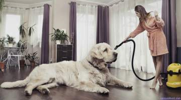 Best Vacuum for Pet Hair Reviews – A Comprehensive Buying Guide