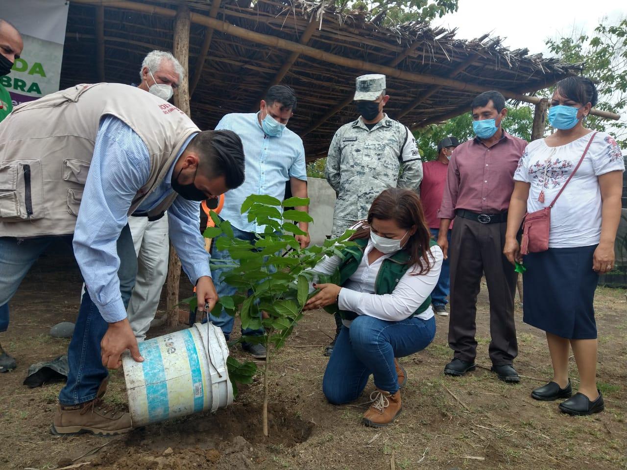 Ha dispersado 361.3 mdp el programa Sembrando Vida en Colima: Guadalupe Solís