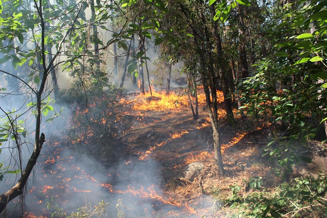 Cerró temporada de incendios forestales en Colima con menos hectáreas afectadas que el año anterior: CONAFOR