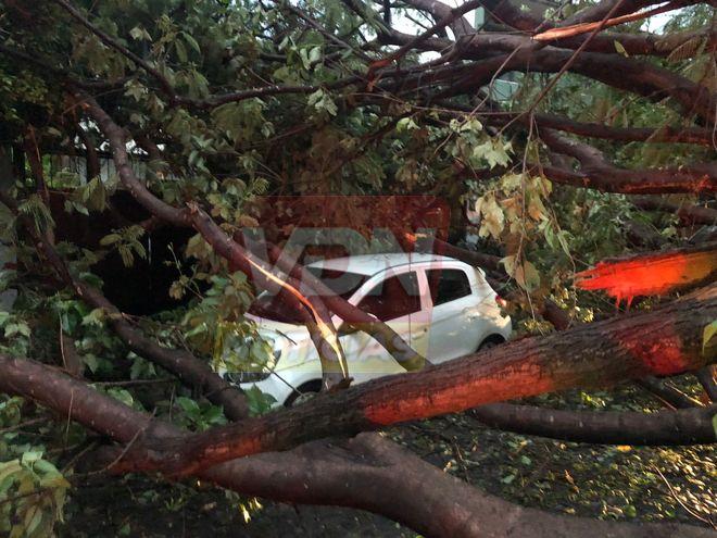 Se presenta fuerte viento en la zona conurbada Colima-Villa de Álvarez, hay varios árboles caídos