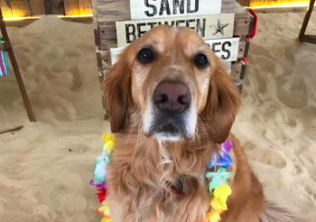 Manchester Has Its Own Dog Cafe With BEACH And Everyone Needs To Know About It