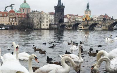 Visiter Prague en 3 jours,  que voir et que faire ?