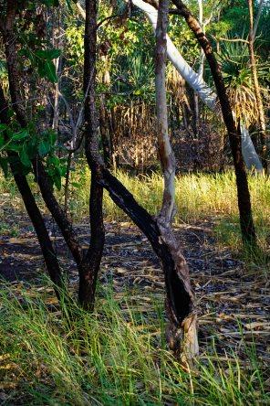 Vagabondays-Australia-Kakadu-8