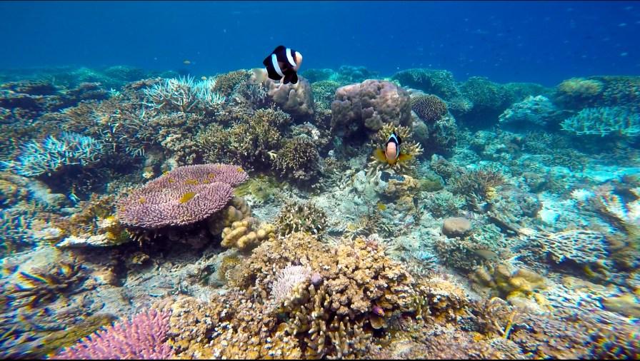 Vagabondays-Komodo-Indonesia-10