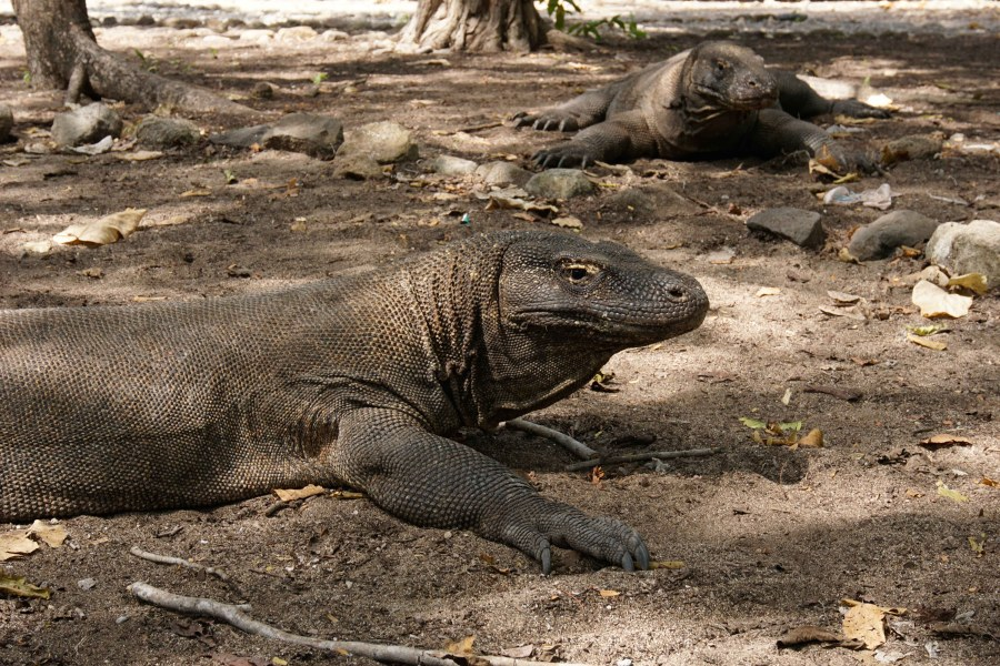 Vagabondays-Komodo-Indonesia-52