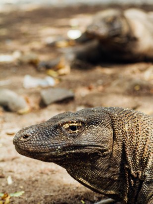 Vagabondays-Komodo-Indonesia-54