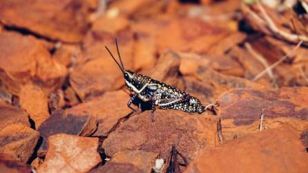 vagabondays-australia-karijini-52