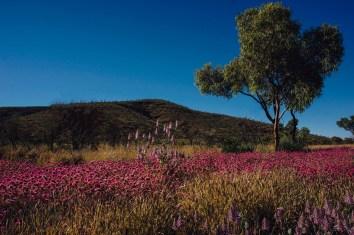 vagabondays-australia-karijini-61