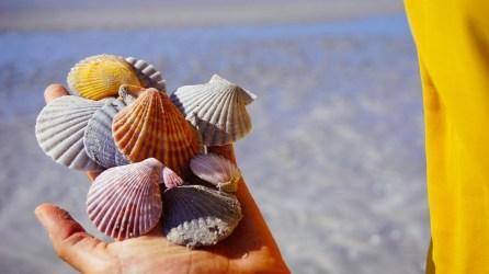 vagabondays-australia-80-miles-beach-5