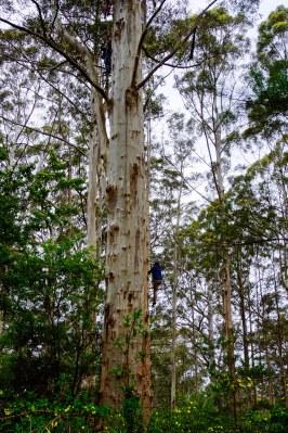 vagabondays-margaret-river-australia-19