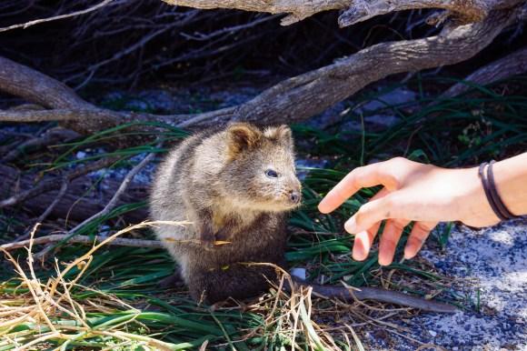 vagabondays-rottnest-australia-23