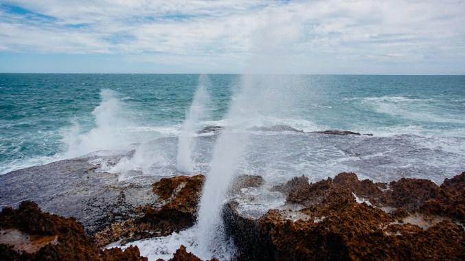 vagabondays-shark-bay-australia-3
