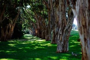 vagabondays-australia-sydney-78