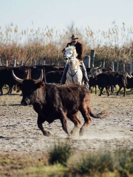 Vagabondays-Camargue-France-97