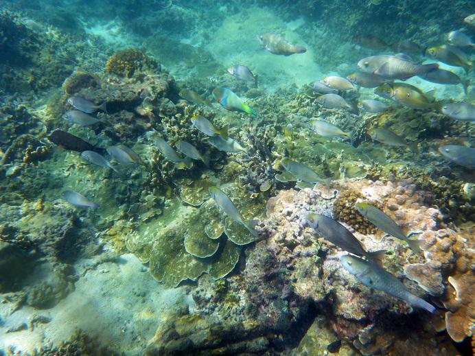 Phuket Snorkeling Trip