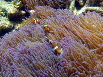Coral Island Tioman Malaysia 15