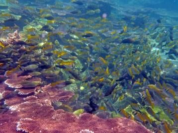 Coral Island Tioman Malaysia 16