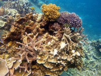 Coral Island Tioman Malaysia 2