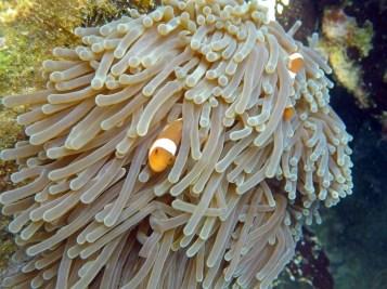Coral Island Tioman Malaysia 8