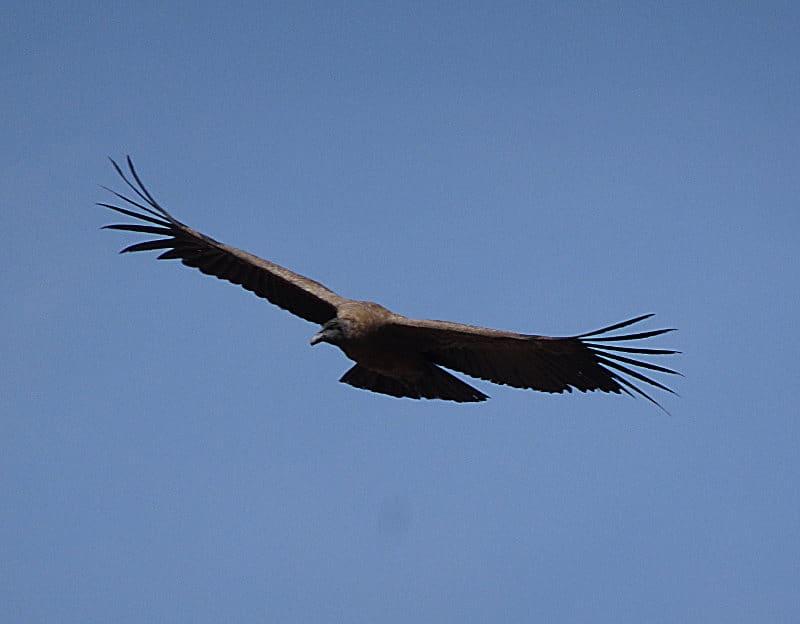 itinéraire de 3 semaines au Pérou condor
