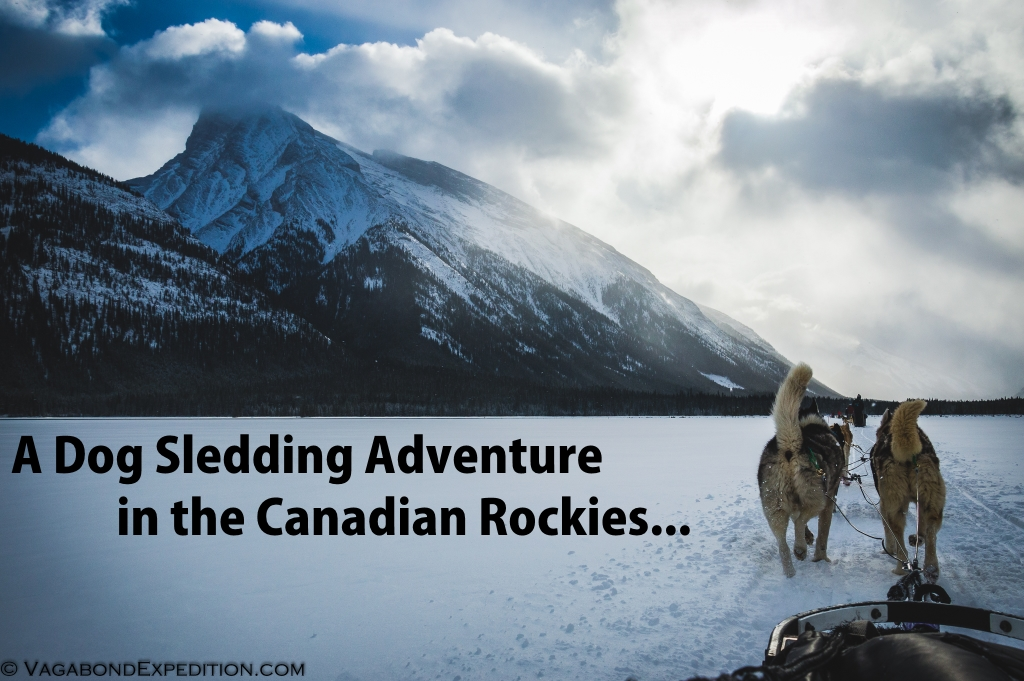 vagabondexpedition on an overlanding sled dog adventure in the canadian rocky mountains - dog sledding at it's finest