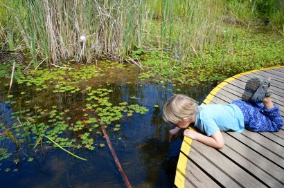 Ivan utforskar dammen i barnparken i Royal Botanical Garden
