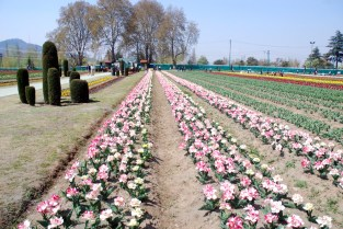 Tulip Garden is adjacent to Botonical garden.
