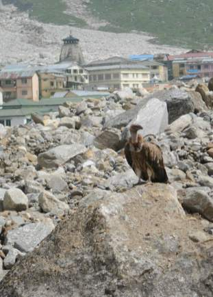 With dead bodies rotting, vultures are already hovering the temple town.
