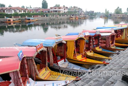 Shikaras ready to welcome the tourists in Dal lake at Srinagar