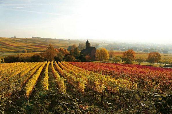 Autumn in Palatinate, Germany. Photo: Sudliche Weinstrabe