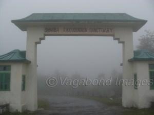 शिंगबा रोडोडेंड्रन सेंक्चुअरी उत्तरी सिक्किम के यूमथांग के रास्ते में है