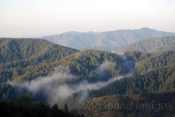 Hills around Chail and Kufri