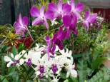 Orchid house has a colour riot