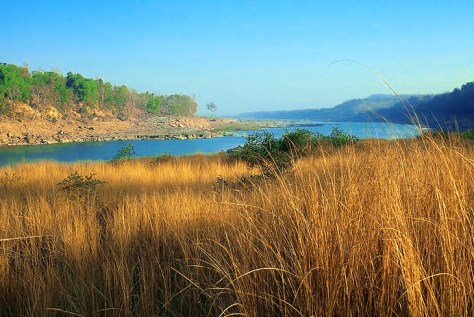 Ken river is the lifeline of Panna national park